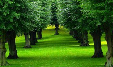 Drveće i Theta Healing