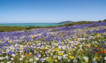 KAPSKO florističko carstvo – kako je nastala najcvetnija oblast Afrike?