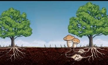 MIKORIZA – tajno prijateljstvo između biljaka i gljiva
